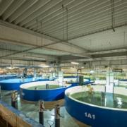 Smart Salmon - sustainability - Aqua Maof RD